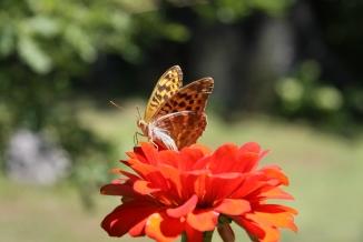 Predi polet, Omaya, Bulgaria